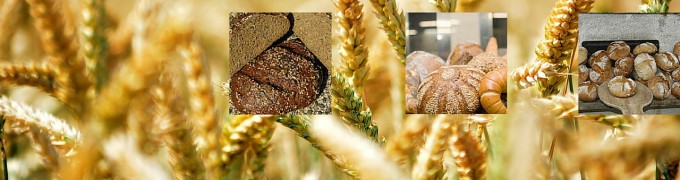 Keim-Kraft-Brot der Bäckerei Bauer im Kaiserhof